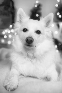 KS Studios Pets Portfolio